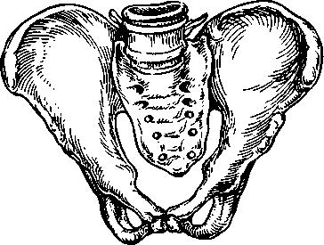 Das Transversale Becken (Abbildung 17.2). Es Ist Durch Eine Abnahme Der  Querabmessungen Des Kleinen Beckens Um 0,6 Bis 1,0 Cm Oder Mehr  Gekennzeichnet, ...