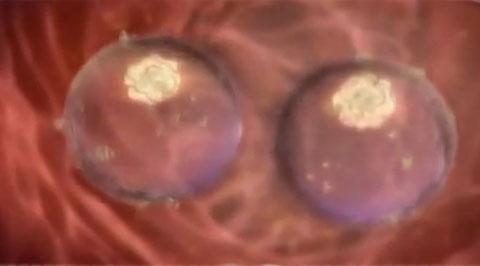 Здесь случай такой: за несколько дней до овуляции сперматозоиды, находившиеся в маточных трубах, попадают в маточную полость.